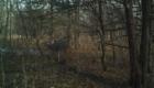 Iowa hunting land for sale